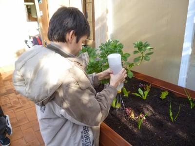 Regant les plantes. Foto: Crespinell